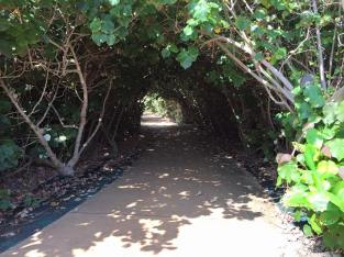 Tree tunnel provided some welcome shade