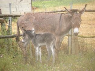 Donkeys along the trail