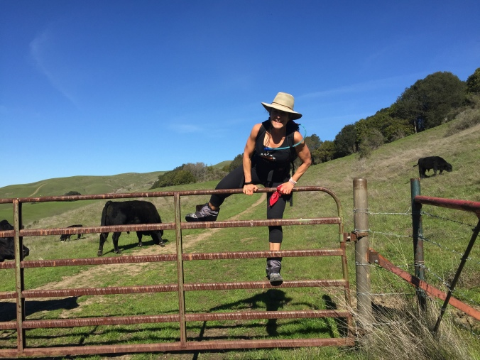 Mama cows were blocking the cattle gate so we climbed over the fence. A girl's gotta do what a girl's gotta do!
