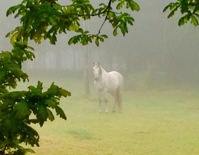 Eerie morning mist