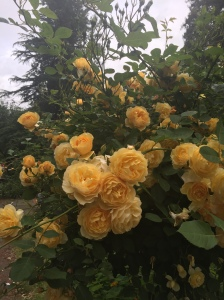 I took the time to smell the roses!