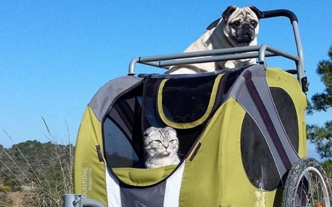 Bandito the pug and Luigi the cat
