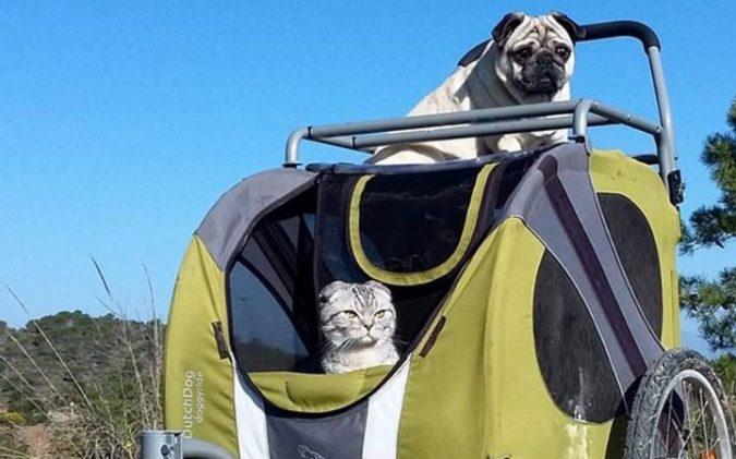 Bandito the pug and Luigi the cat