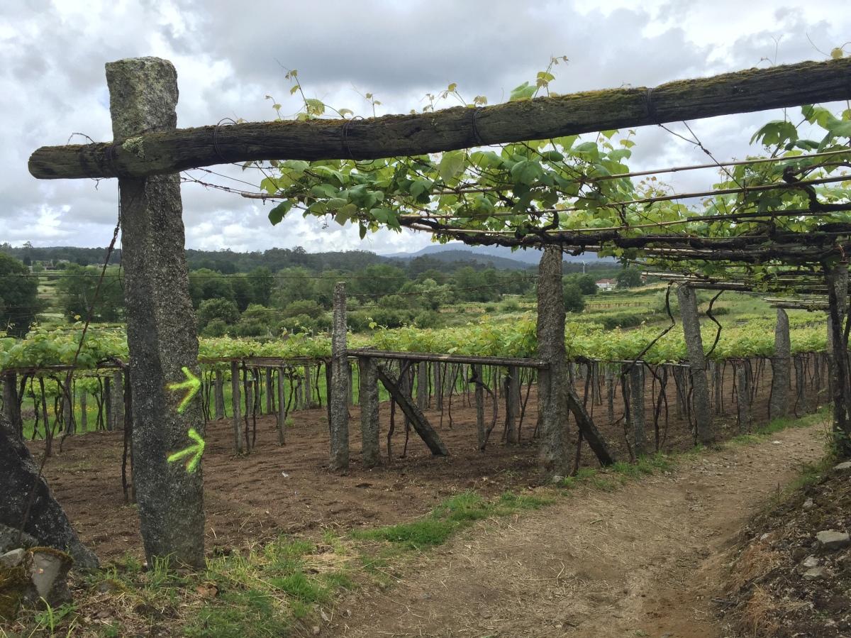Walking Day 4: Pontevedra to Caldas de Reis