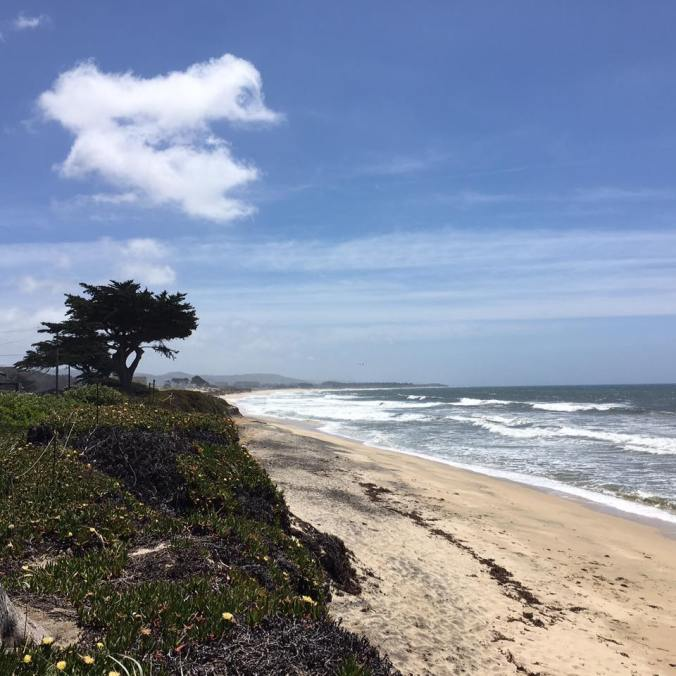 Hike along the California Coastal Trail in Half Moon Bay Sunday, April 23