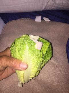 My Lettuce, Turkey, Cheese Wrap.