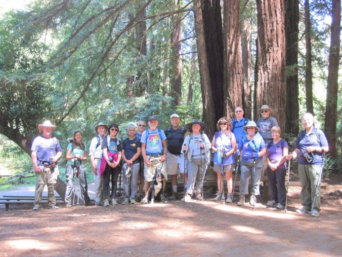 Group photo beneath towering redwoods on the Spring Trail from the 2016 hike.