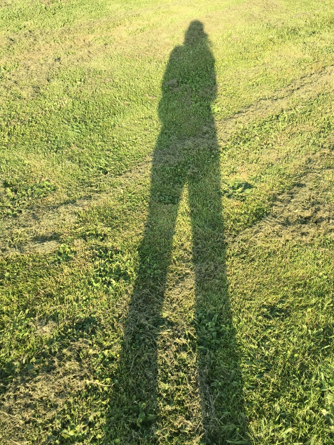 Long afternoon shadow on freshly mowed grass