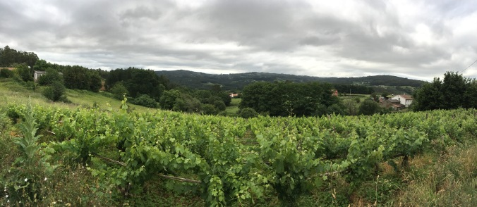 Walking through wine country