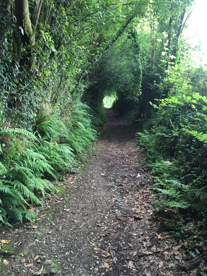 It was an absolutely gorgeous walk with tree tunnels, ferns and foxgloves